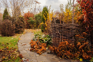 Autumn trees in a garden with wicker fence
