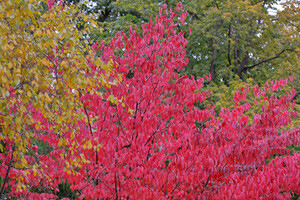 Autumn trees with colourful leaves