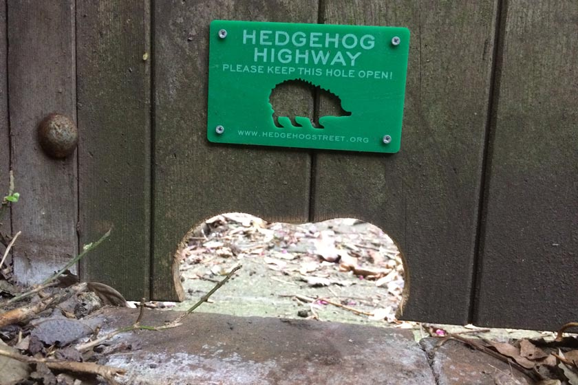 A Hedgehog Highways sign above one of the fence holes.