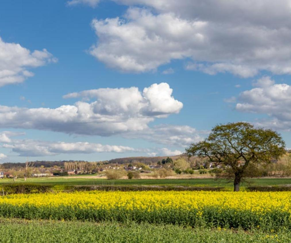 A picture representing the Essex countryside