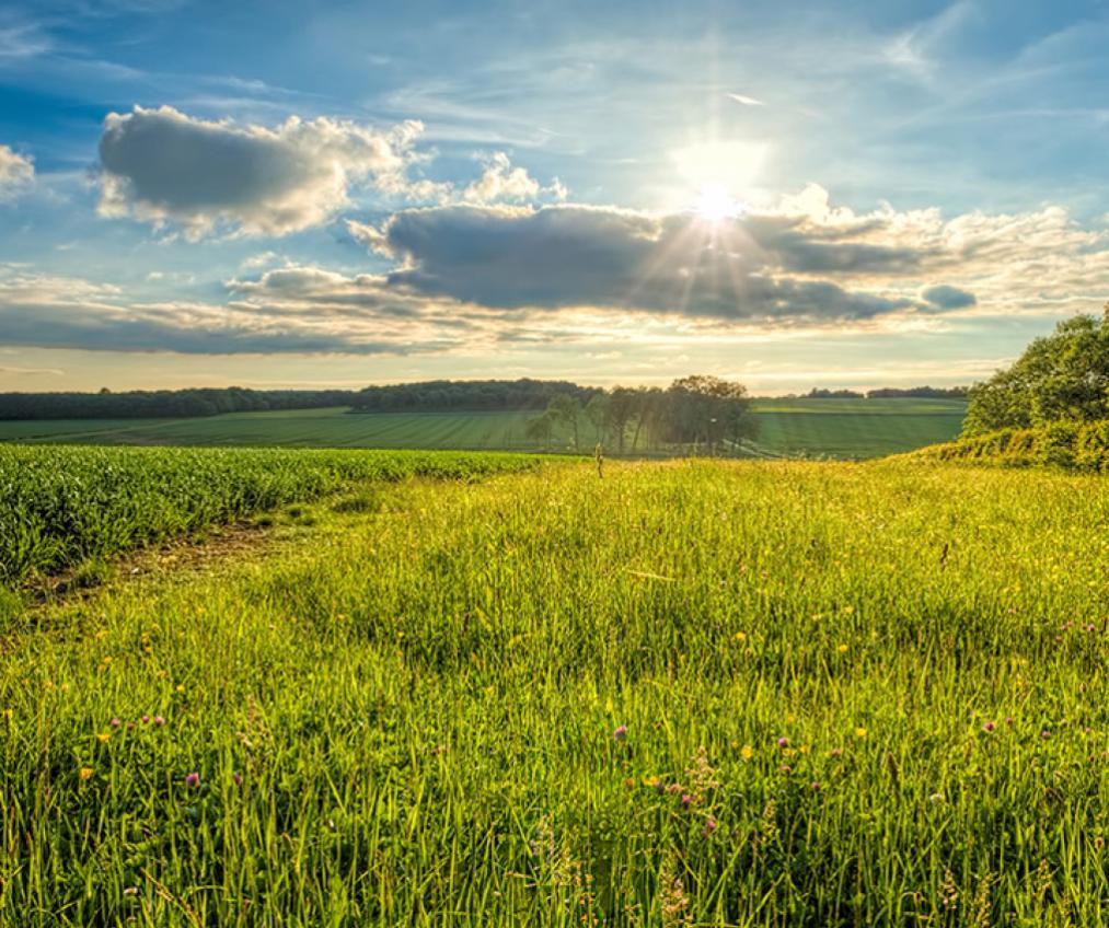 Beautiful rural Cambridgeshire.
