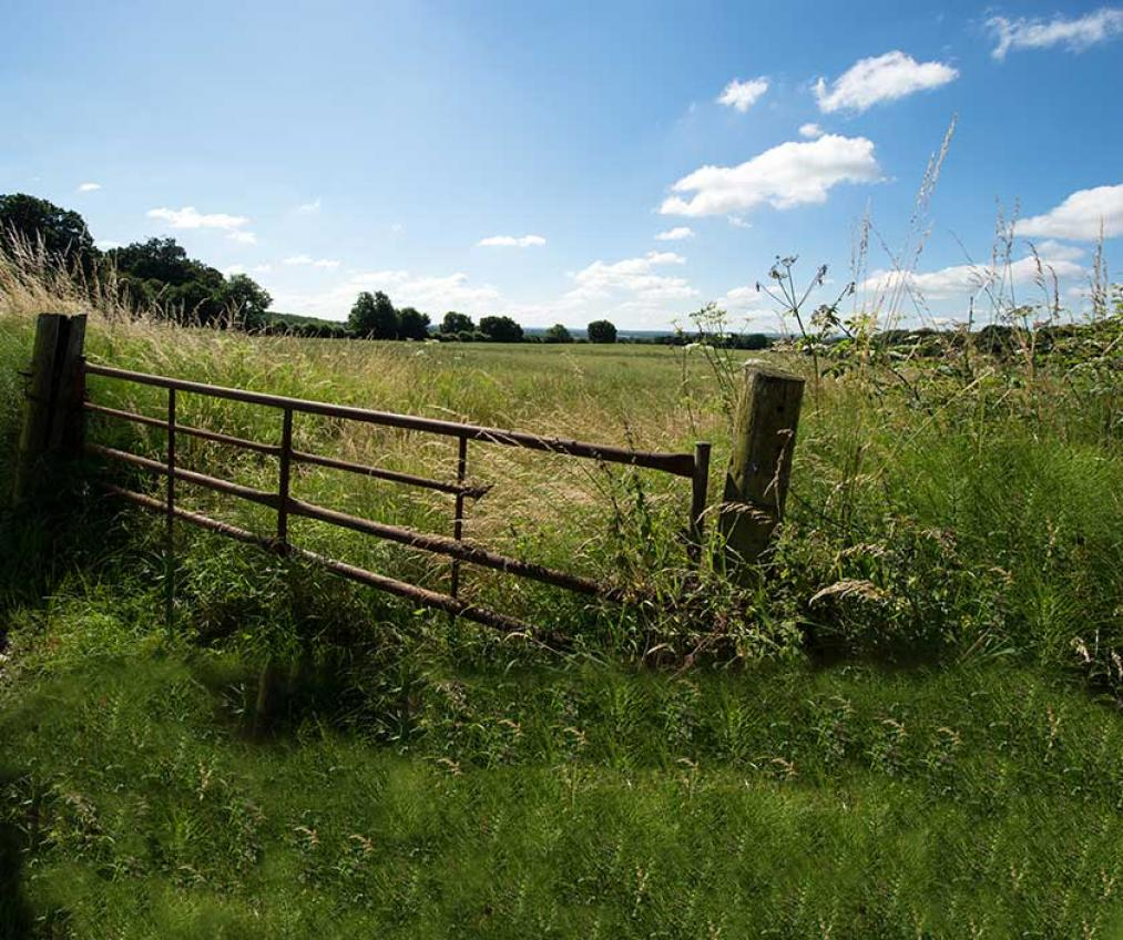 An image of the Kent countryside