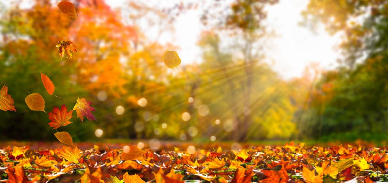 Sun shining through autumn trees with leaves on the ground