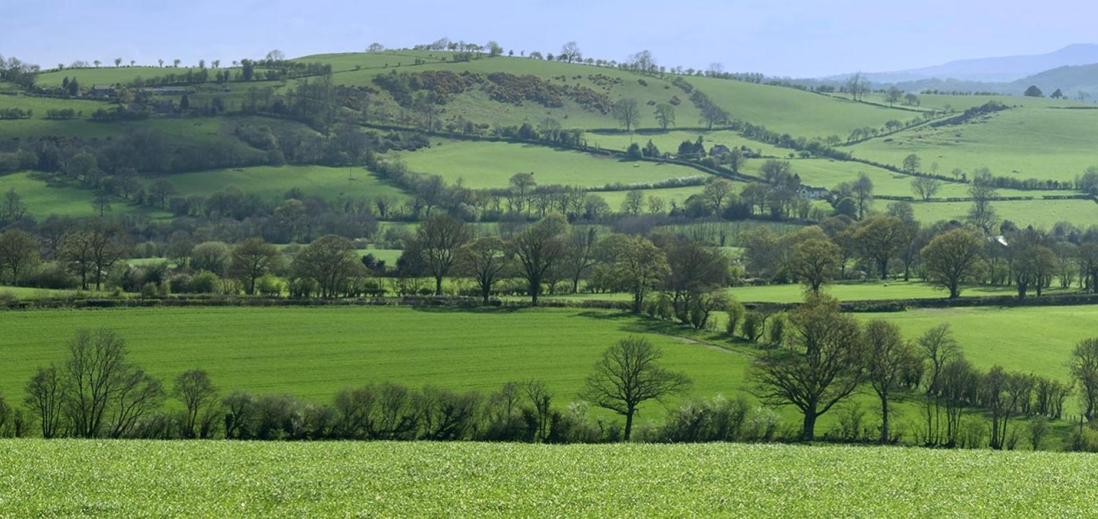 Lush green countryside